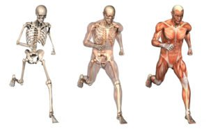 orthopedics-default